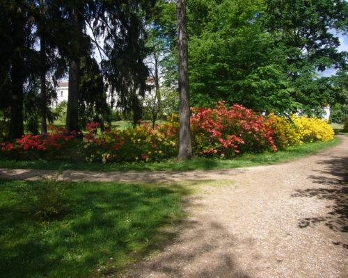 Azalky a rododendrony v parku